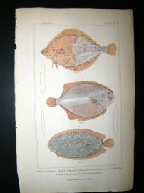 Cuvier C1835 Hand Col Print. The Dab, Barbue or Oval Trout,Marbled Achirus Fish #71